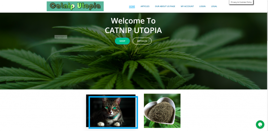 https://ahmdomains.com/wp-content/uploads/2021/05/catnip-utopia-front-page.png