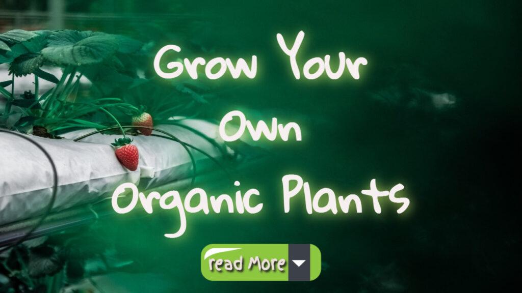 Saving Money If You Grow Your Own Organic Plants