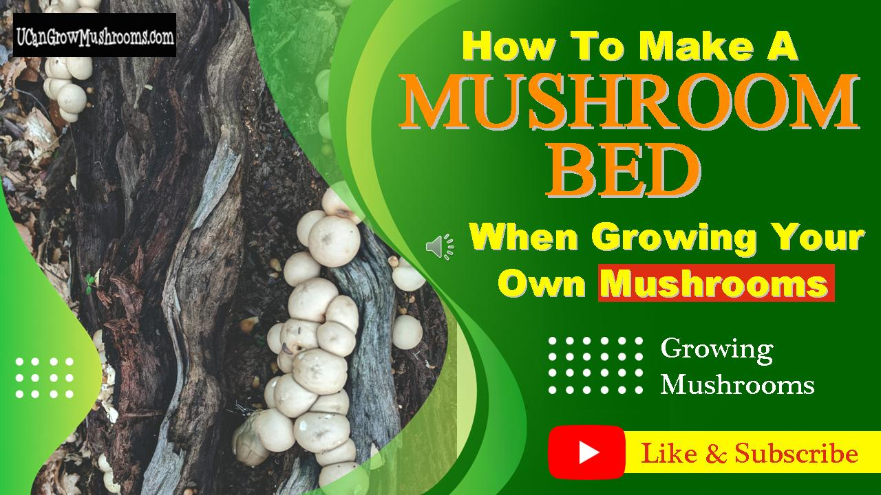 How To Grow Mushrooms On Logs In A Mushroom Bed