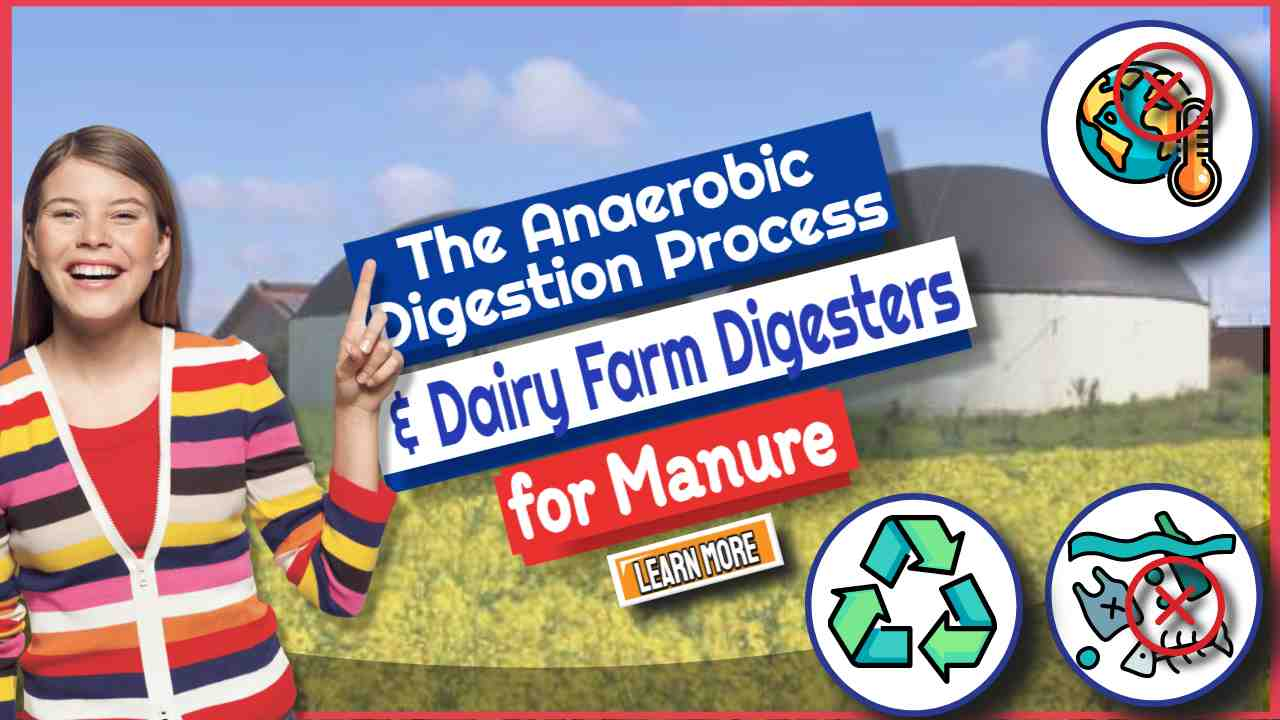 The Anaerobic Digestion Process & Dairy Farm Digesters for Manure