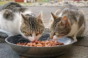 two cats-eating
